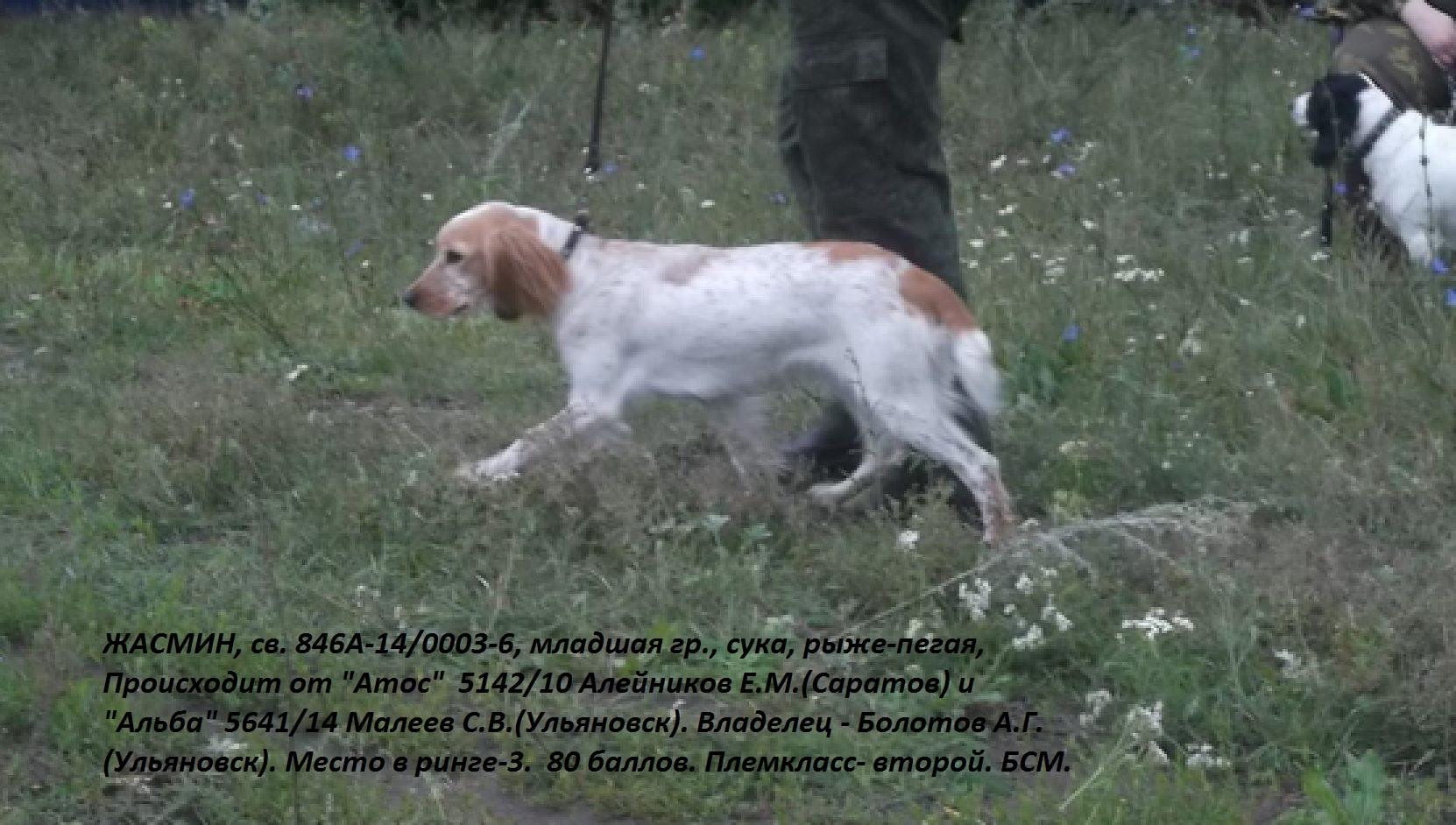 сратовская сучка фото: