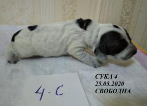 щ.Ай.с3