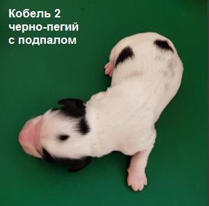 kobel-2